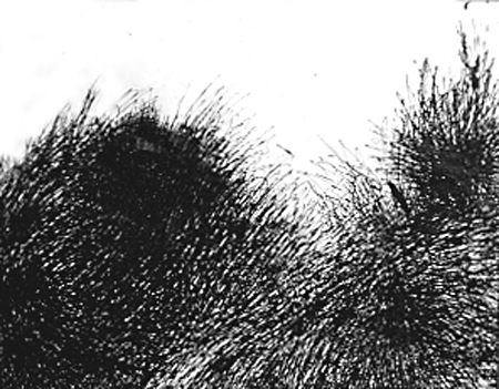 Untitled #4 1959 Ink on paper 22 1/2 x 18 1/4